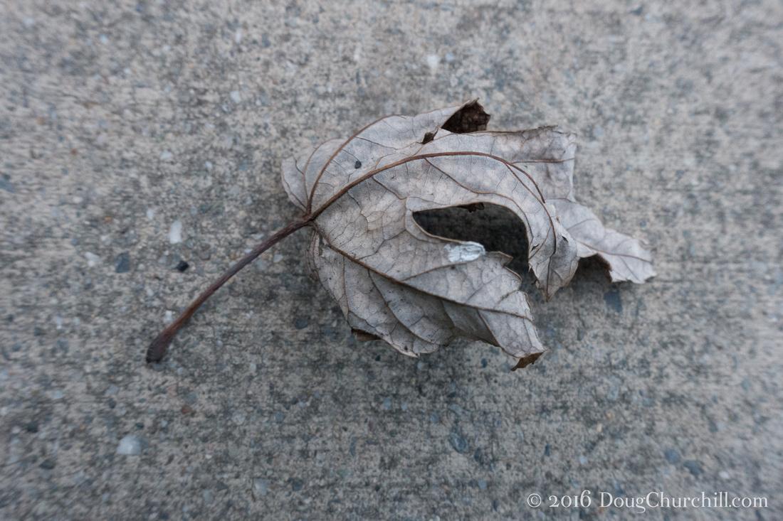 008•366 • 2016 • dry leaf on concrete v2.0