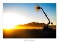 """Miracle Grow"" • Burning Man 2005"
