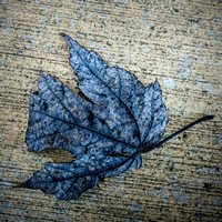 014•366 • 14 January 2016 • dry leaf on concrete v2.1